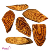 Dried botanical for home decoration
