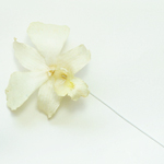Wired Preserved Orchid - Creamy White